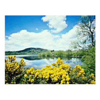 Camlough Lough, County Down, Ireland  flowers Postcard