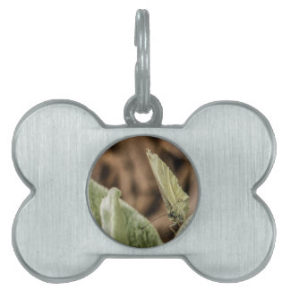 Camo Butterfly Pet ID Tags