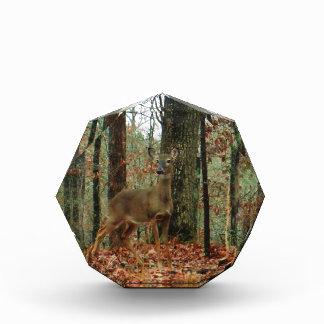 Camo,Camouflage Deer Award