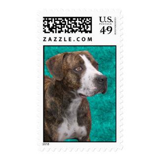 Camo, el perro americano Brindle del pitbull Sellos