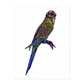 Camoflage Budgie Post Cards