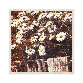 camomile over the old wooden fence canvas print