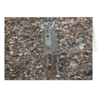 Camouflage Deer in fall leaves Greeting Card