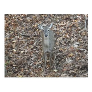 Camouflage Deer in fall leaves Postcard
