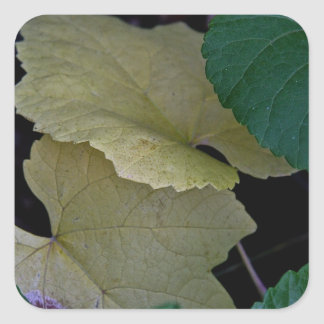 CAMOUFLAGE WITH LEAVES IN EARLY FALL SQUARE STICKER
