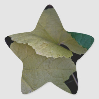 CAMOUFLAGE WITH LEAVES IN EARLY FALL STAR STICKER