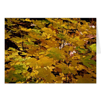 CAMOUFLAGE WITH LEAVES IN LATE FALL CARD