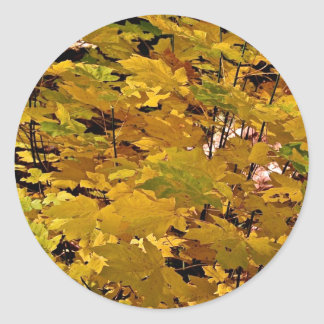 CAMOUFLAGE WITH LEAVES IN LATE FALL CLASSIC ROUND STICKER