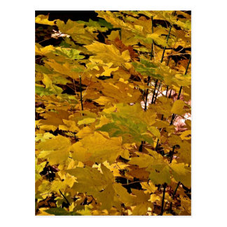 CAMOUFLAGE WITH LEAVES IN LATE FALL POSTCARD