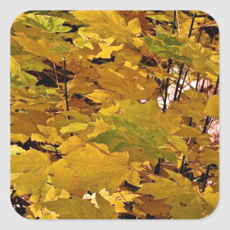CAMOUFLAGE WITH LEAVES IN LATE FALL SQUARE STICKER