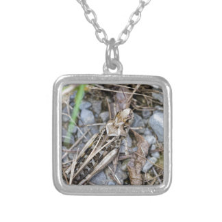 Camouflaged Grasshopper Silver Plated Necklace