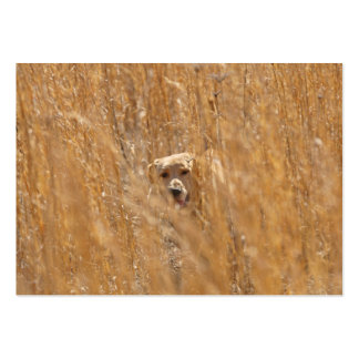Camouflaged Yellow Labrador Retriever Large Business Card