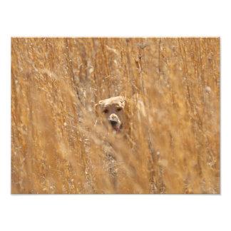 Camouflaged Yellow Labrador Retriever Art Photo