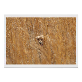 Camouflaged Yellow Labrador Retriever Poster
