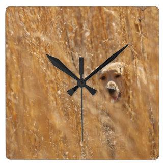 Camouflaged Yellow Labrador Retriever Square Wall Clock