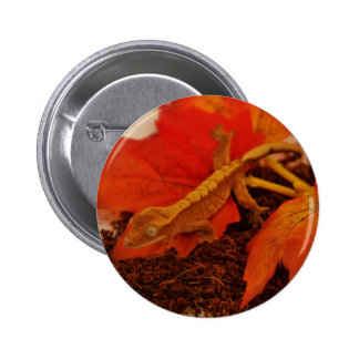 Camouflaging Crested Gecko Button