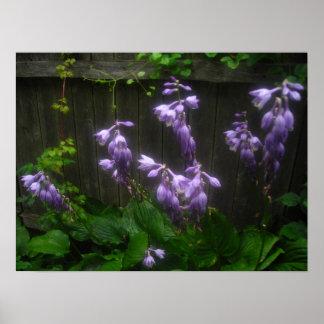 campanas púrpuras del hosta poster