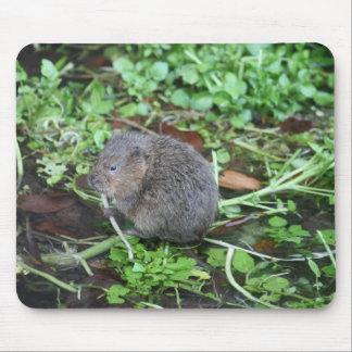 Campañol de agua tapetes de raton