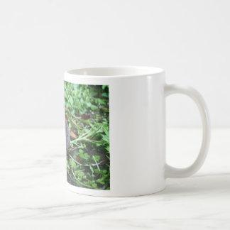 Campañol de agua tazas de café