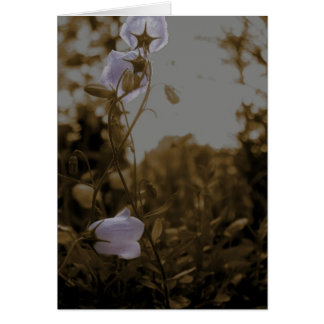 campanula antique greeting cards
