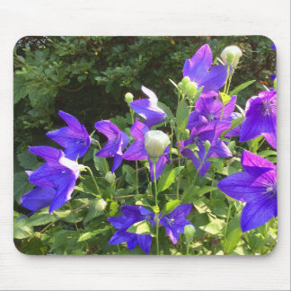 Campanula Cluster (Blue Balloon Flowers) --- Mouse Pad