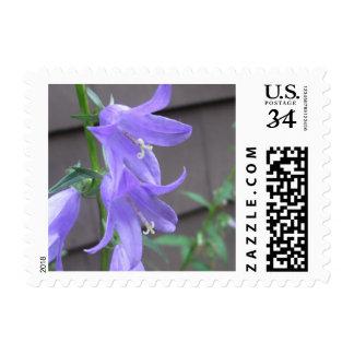 Campanula Garden Flower Postage Stamps