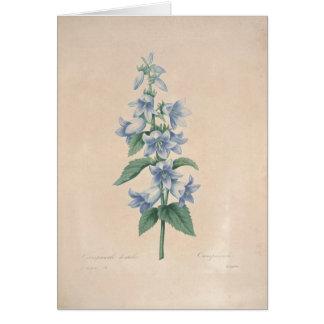 Campanula por la tarjeta de condolencia botánica
