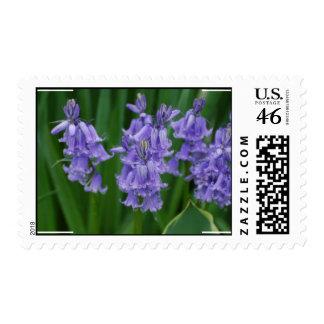 Campanula Stamp