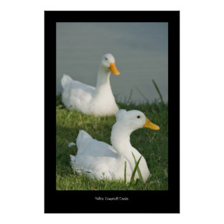 Campbell Duck Poster Print