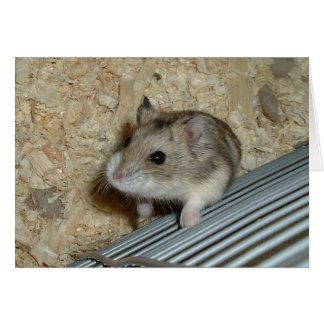 Campbells Hamster Card
