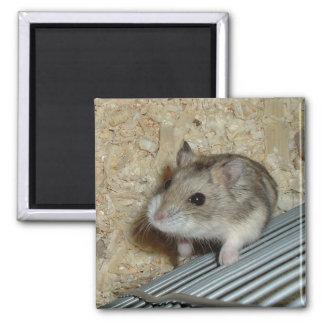 Campbells Hamster Magnet