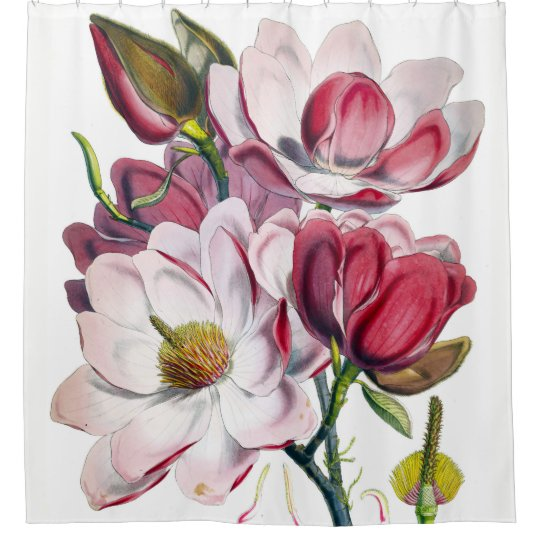 Campbells Magnolia Shower Curtain