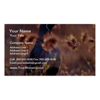 Campbells Quail Pink flowers Double-Sided Standard Business Cards (Pack Of 100)
