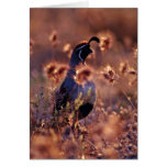 Campbells Quail Pink flowers Greeting Cards