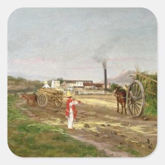 Campesinos que recogen la caña de azúcar pegatina cuadrada