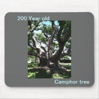 Camphor tree/Laurel tree on mouse pad