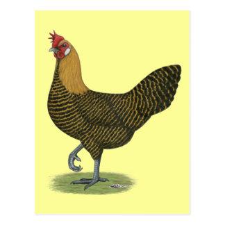 Campine:  Golden Hen Postcard