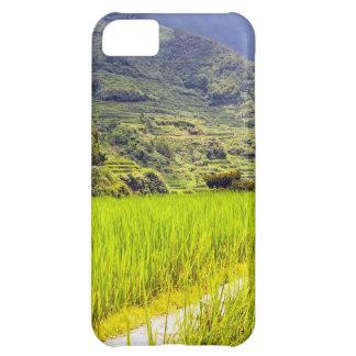 Campo 2 del arroz