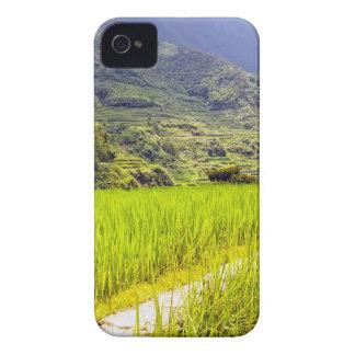 Campo 2 del arroz iPhone 4 Case-Mate coberturas