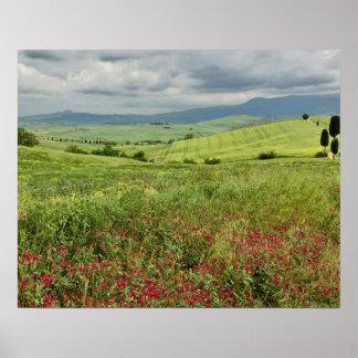 Campo agrícola, región de Toscana de Italia Poster