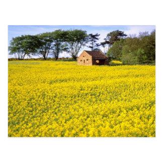 campo amarillo de la rabina amarilla en North York Postal