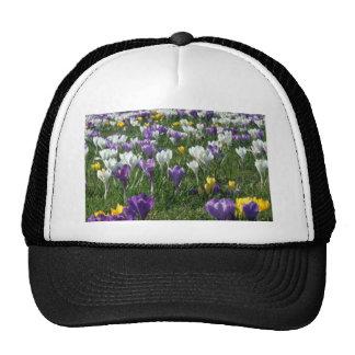 Campo amarillo de las flores de las azafranes gorros bordados