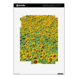 Campo amarillo del girasol pegatina skin para iPad 3