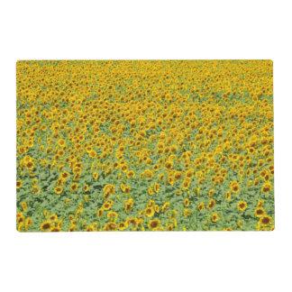 Campo amarillo del girasol tapete individual