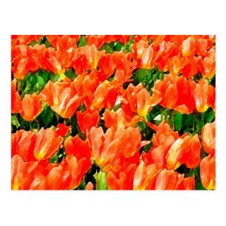 Campo anaranjado de tulipanes postal