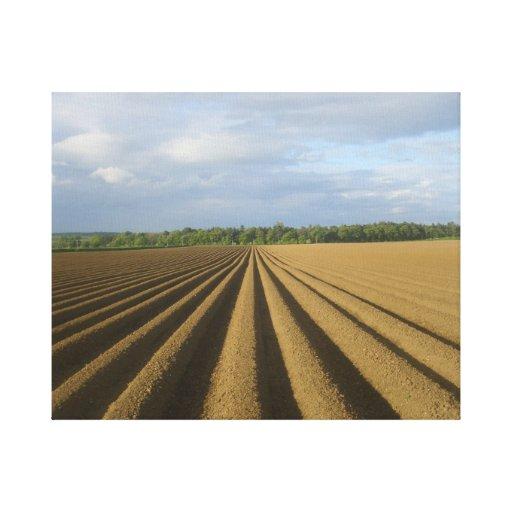 Campo arado escocés lona envuelta para galerías