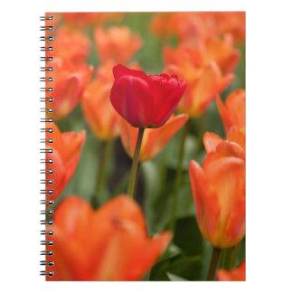 Campo de amapolas cuaderno