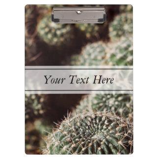 Campo de cactus, fotografía botánica roja caliente