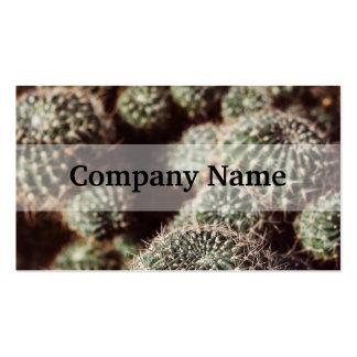 Campo de cactus, fotografía botánica roja caliente tarjetas de visita
