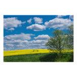 Campo de Canola con el árbol y el cielo azul